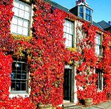 West Coast Scotland Golf Resorts - The Golf Inn