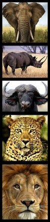 South Africa's Big Five